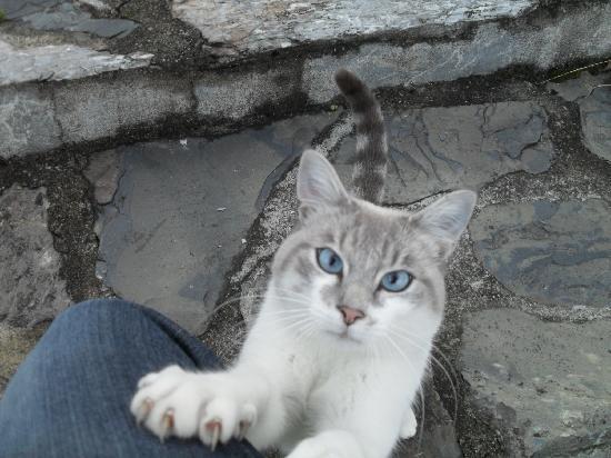 Les Terrasses de Saubissan : Le chat de la maison