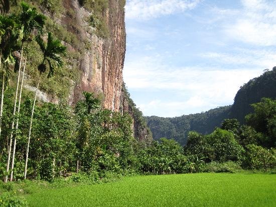 Harau, Indonesia: scenery behind the bungalows