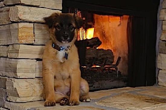 Vagabond's House Inn: Puppy