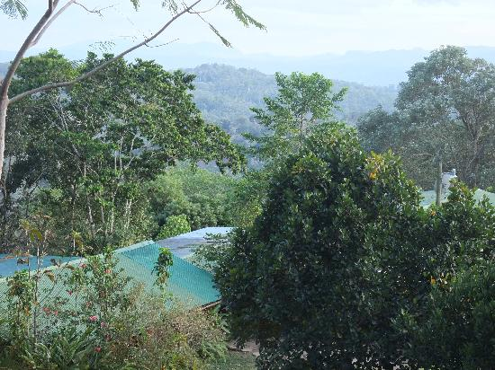 La Sombra Ecolodge : View from the lodge; it's better than this picture was able to capture