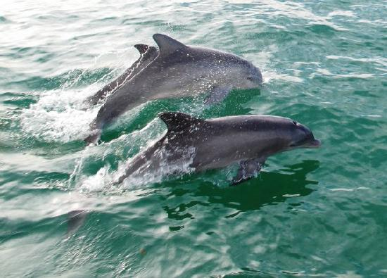 Aquaworld Miami : See the Dolphins