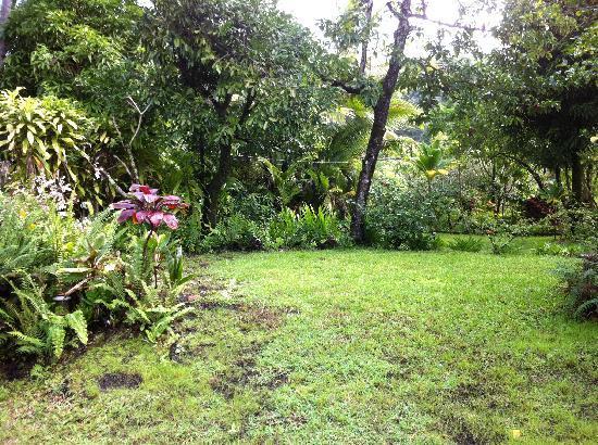 Kapoho Village Inn: beautiful grounds