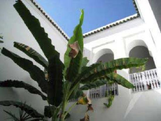 Riad Johana: jardin