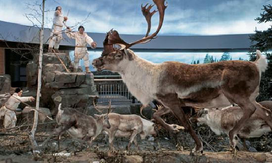 Mashantucket, CT: Life in a Cold Climate Exhibit: The Caribou Hunt Diorama