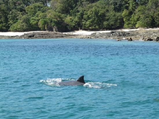 Mar & Oro : delfines
