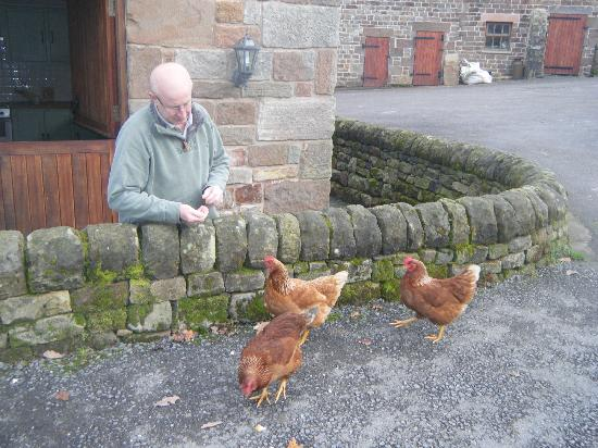 Ringehay Farm Holiday Cottages: Feeding the locals