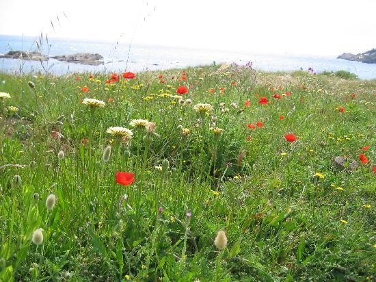 Sentoline, Ecotourisme en Provence Day Tours : La nature à l'état pur !