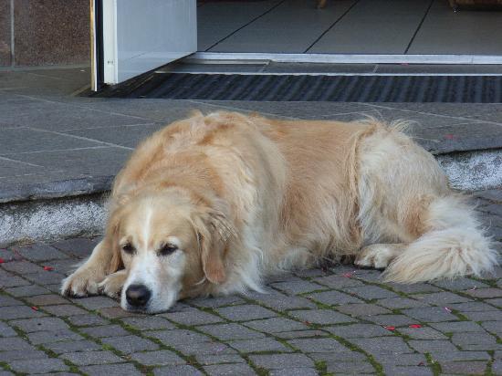 Pension Sonnenhof: Der Pensionshund