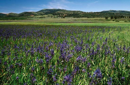 Helena National Forest