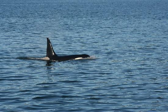 Orca Enterprises: Orca