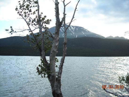 Renfro's Lakeside Retreat: View of Kenai Lake from cabin