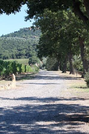 Agriturismo Il Poggione: the road from sant' angelo in colle to tenuta il poggione