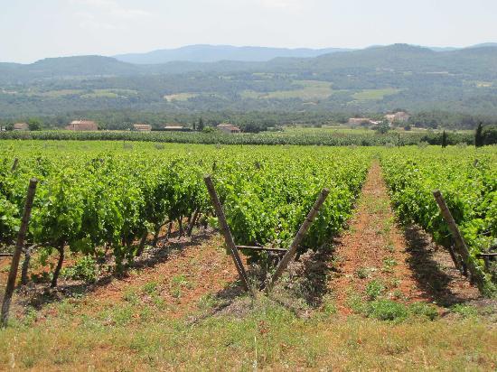 Le Mas Jorel: Champs de vignes