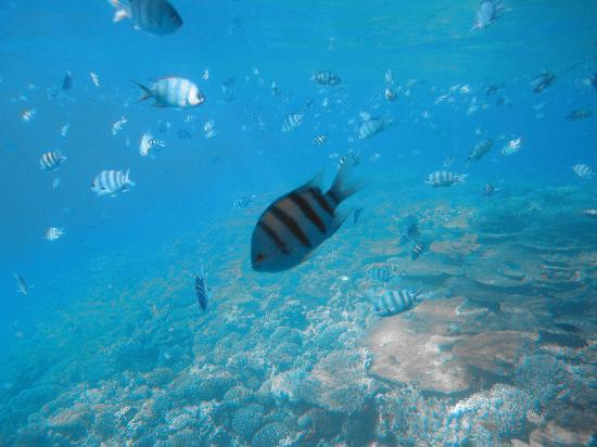 snorkeling was unreal  Grand Resort 5*, Єгипет,  Хургада - photo