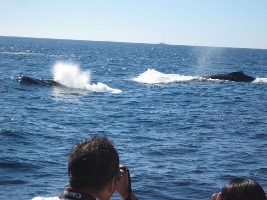 Pez Gato Cabo Sailing Catamarans : Whales