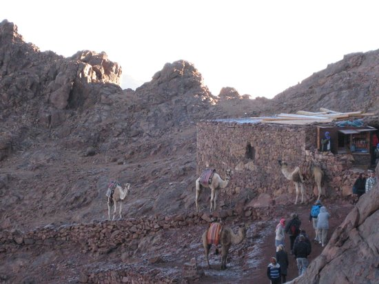 Mount Sinai: Camels available at a refreshment stop