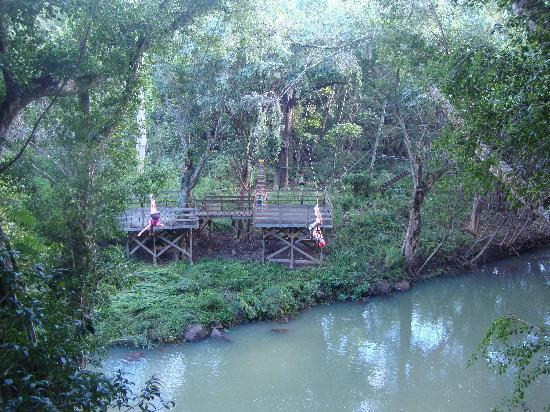 Treehouse Zipline Course