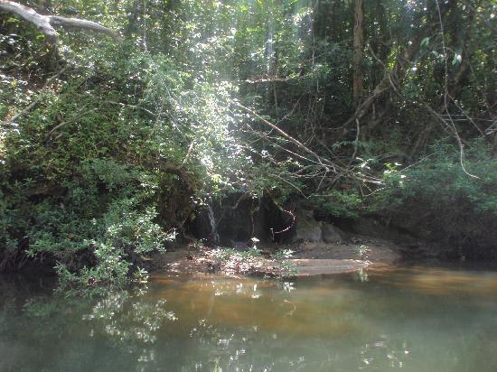 Cockscomb Basin Wildlife Preserve: the river