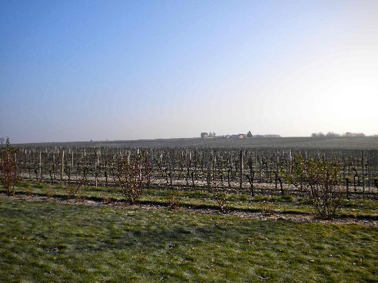 Domaine de Blaignac: Panorama