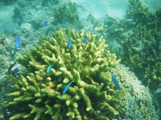 Navutu Stars Fiji Hotel & Resort: Traumhafte Korallen und Fische