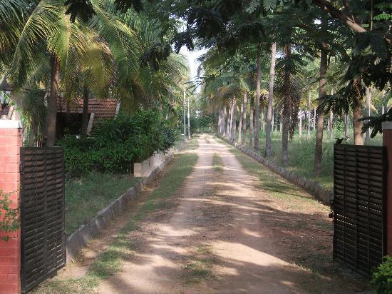 Gitanjali Homestay: View up the driveway