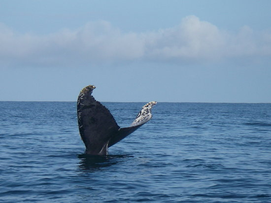 Parco nazionale di Corcovado, Costa Rica: Humpback on route to Sirena