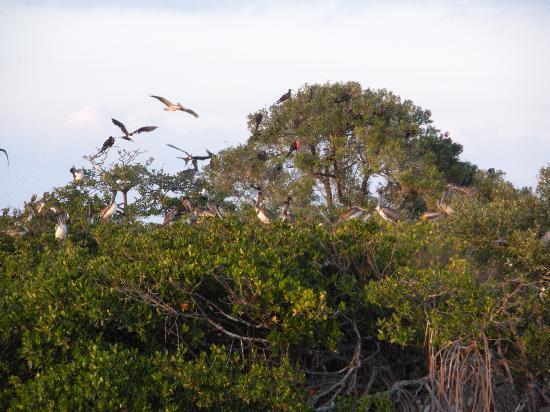 Sunshine Wildlife Eco Tours: Bird Island