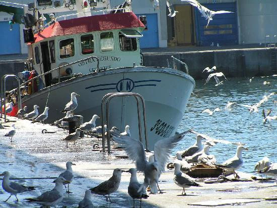 Vigo, Spanien: Im Fischerhafen