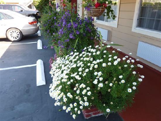 Comfort Inn Monterey by the Sea: des fleurs partout!!