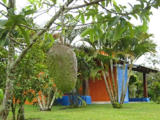 Erupciones Inn Bed And Breakfast: accommodation