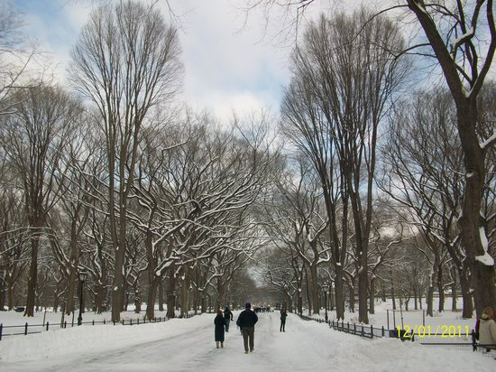 New York City, NY: Snowy Central Park