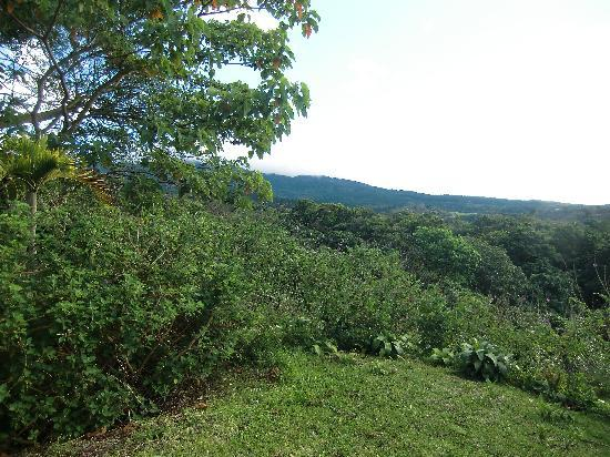Hotel Mango Valley: view from our cabin
