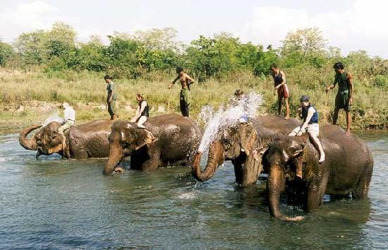 River Bank Inn: elephant bathing
