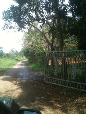 Palacete Los Moreau: Entrance to the long beautiful road to La Palacete!