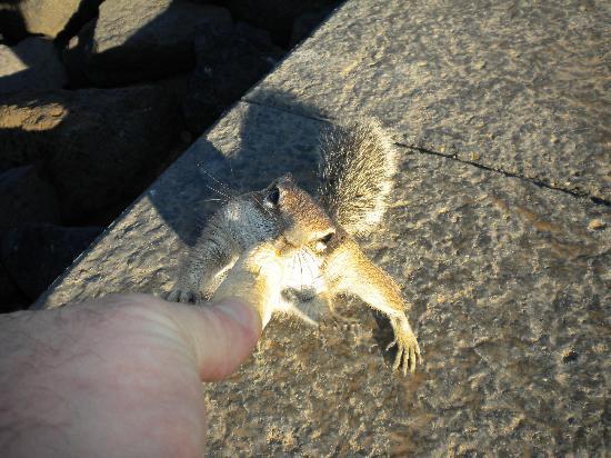 Globales Costa Tropical : Feeding the chipmunks