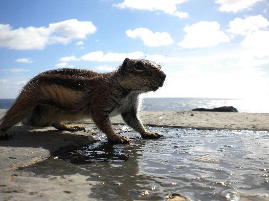 Globales Costa Tropical: The original Alvin the chipmunk