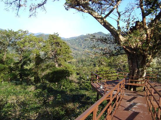 Los Establos Boutique Hotel: Viewing deck around tree