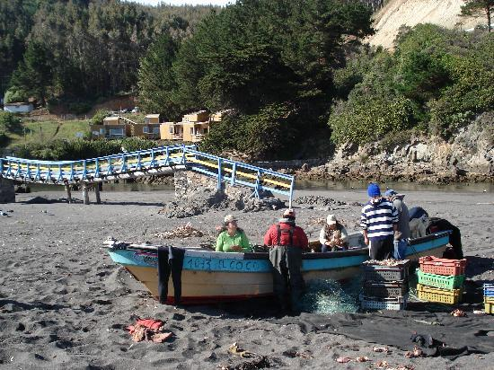 Buchupureo, Чили: Crab fishermen removing catch from nets, cabana can be seen in background