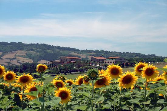 hotel fattoria belvedere casino di terra province of pisa italien