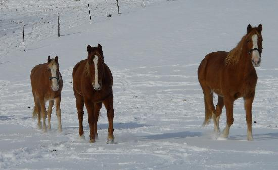 Crazyhorse Ranch & Lodge: The friendly staff awaits you...