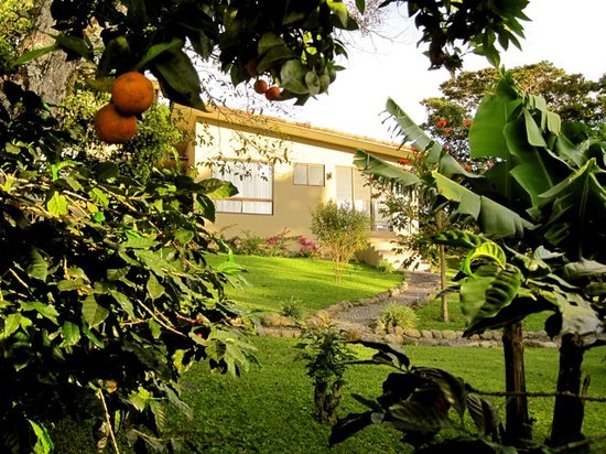 The Guest Suites at Manana Madera Coffee Estate: Guest Suite View from the Garden