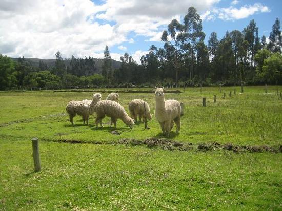 Hotel Campestre Hacienda Yanamarca: Es muy bonito el paisaje y los animales