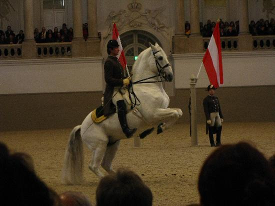 Spanish Riding School : school above the ground