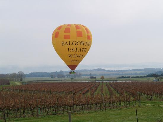 Balgownie Estate Vineyard Resort & Spa: Global Ballooning