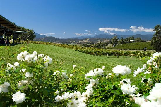 Balgownie Estate Vineyard Resort & Spa: Resort