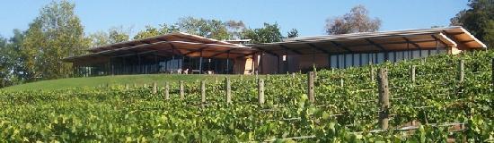 Balgownie Estate Vineyard Resort & Spa: Vineyard