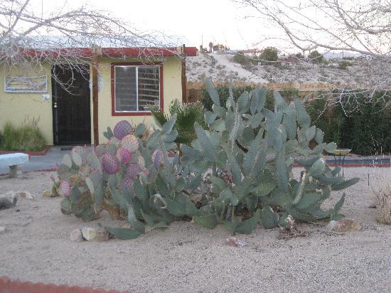 Harmony Motel: Cactus at the Harmony