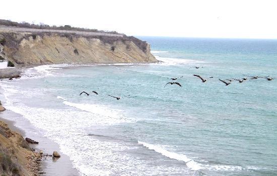 vuelo de aves sobre playa de Manta