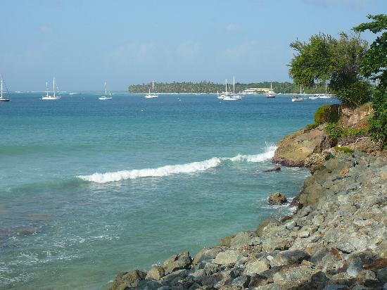 Tobago Forest Reserve: Beautiful Tobago