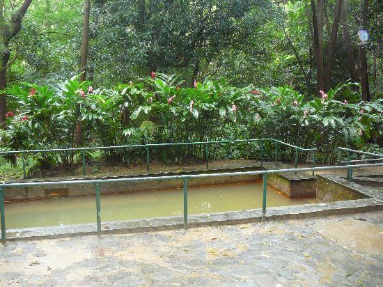 Soufriere Volcano : Original hot springs